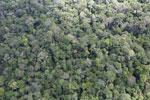 Borneo rainforest -- sabah_aerial_1032
