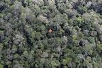 Borneo rainforest -- sabah_aerial_1034