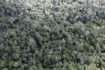 Borneo rainforest -- sabah_aerial_1035
