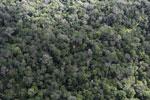 Borneo rainforest -- sabah_aerial_1036