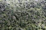 Borneo rainforest -- sabah_aerial_1037