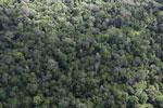Borneo rainforest -- sabah_aerial_1038