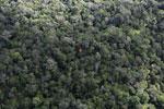 Borneo rainforest -- sabah_aerial_1039