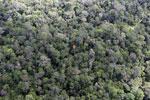Borneo rainforest -- sabah_aerial_1040