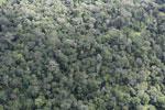 Borneo rainforest -- sabah_aerial_1041