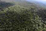 Borneo rainforest -- sabah_aerial_1042