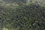 Borneo rainforest -- sabah_aerial_1046