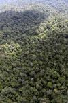 Borneo rainforest -- sabah_aerial_1047