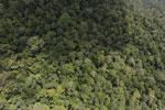 Borneo rainforest -- sabah_aerial_1051