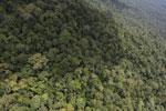 Borneo rainforest -- sabah_aerial_1053