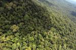 Borneo rainforest -- sabah_aerial_1054