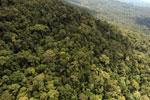 Borneo rainforest -- sabah_aerial_1061