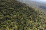 Borneo rainforest -- sabah_aerial_1062