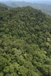 Borneo rainforest -- sabah_aerial_1064