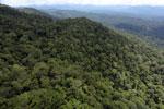 Borneo rainforest -- sabah_aerial_1066