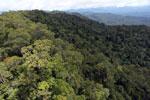 Borneo rainforest -- sabah_aerial_1069