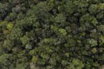 Borneo rainforest -- sabah_aerial_1075
