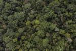 Borneo rainforest -- sabah_aerial_1076