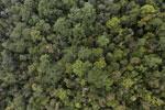 Borneo rainforest -- sabah_aerial_1077