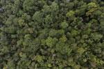 Borneo rainforest -- sabah_aerial_1078