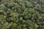 Borneo rainforest -- sabah_aerial_1080