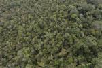 Borneo rainforest -- sabah_aerial_1081