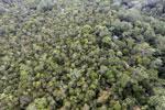Borneo rainforest -- sabah_aerial_1082