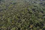 Borneo rainforest -- sabah_aerial_1083