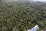 Borneo rainforest -- sabah_aerial_1086