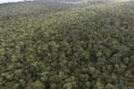 Borneo rainforest -- sabah_aerial_1088