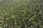 Borneo rainforest -- sabah_aerial_1089