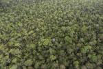 Borneo rainforest -- sabah_aerial_1090