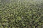 Borneo rainforest -- sabah_aerial_1091