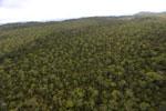 Borneo rainforest -- sabah_aerial_1092