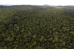 Borneo rainforest -- sabah_aerial_1094