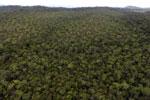 Borneo rainforest -- sabah_aerial_1096