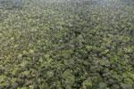 Borneo rainforest -- sabah_aerial_1098
