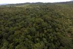 Borneo rainforest -- sabah_aerial_1099