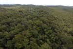 Borneo rainforest -- sabah_aerial_1100
