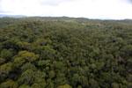 Borneo rainforest -- sabah_aerial_1102