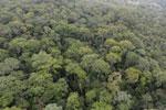 Borneo rainforest -- sabah_aerial_1104