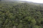 Borneo rainforest -- sabah_aerial_1105