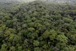 Borneo rainforest -- sabah_aerial_1106