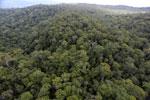 Borneo rainforest -- sabah_aerial_1109