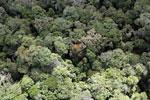 Borneo rainforest -- sabah_aerial_1110