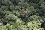 Borneo rainforest -- sabah_aerial_1111