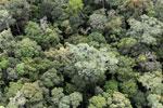 Borneo rainforest -- sabah_aerial_1113