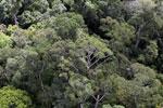 Borneo rainforest -- sabah_aerial_1115