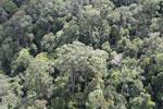 Borneo rainforest -- sabah_aerial_1118