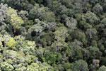 Borneo rainforest -- sabah_aerial_1121